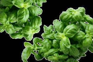 basil-herbs-green-mediterranean