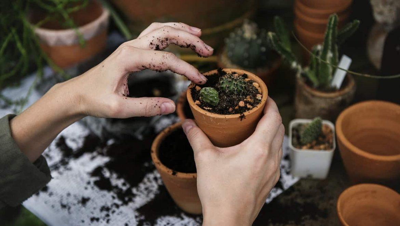 3 יתרונות לצמחייה מלאכותית לעומת צמחייה חיה